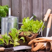 gardening_accessories-1080x675
